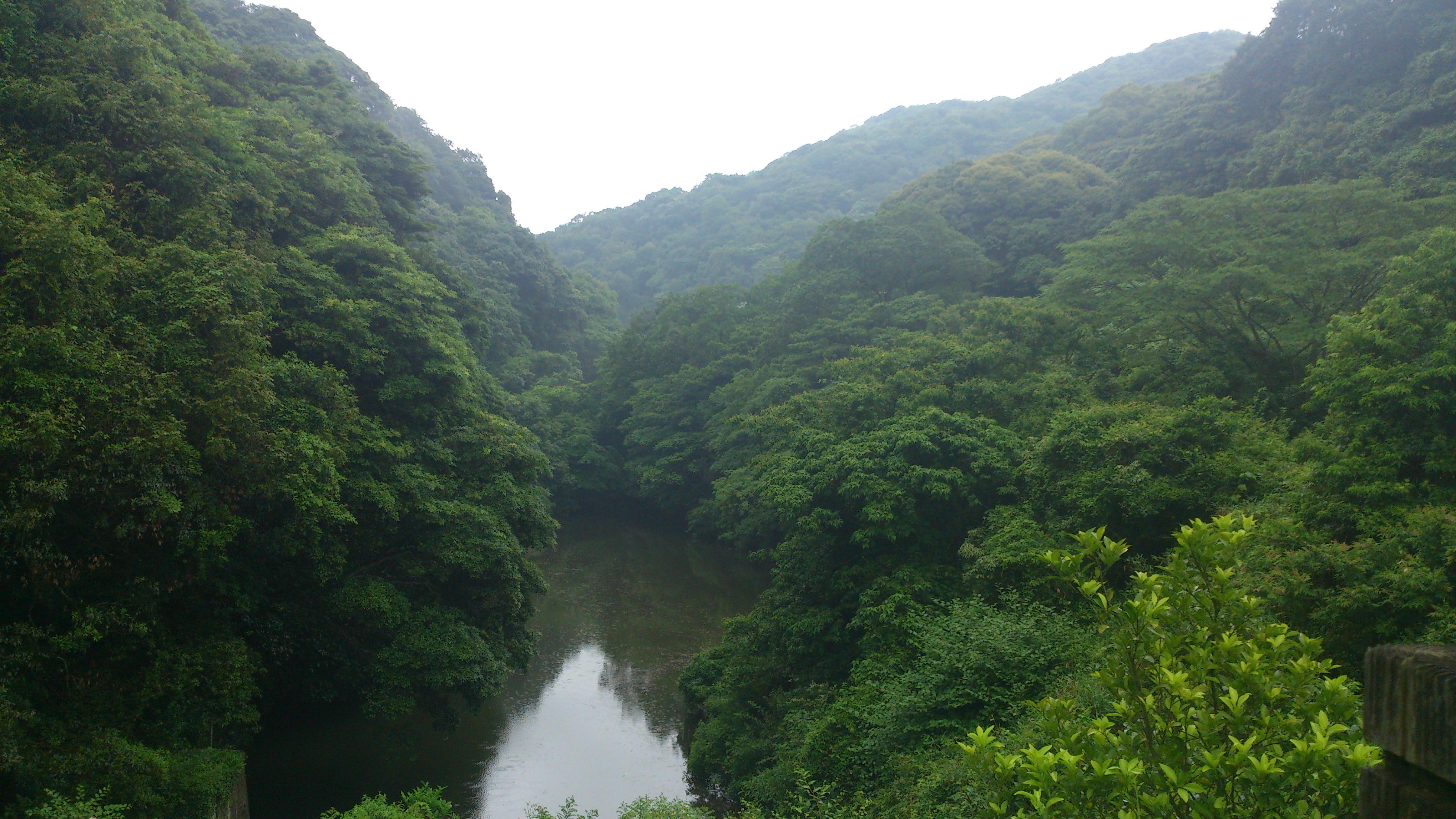 山田緑地の早朝バードウォッチング